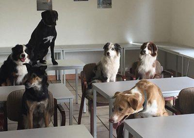 hundeschule05